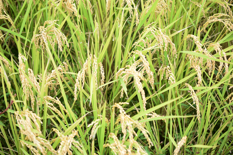 丹州 河北農園
