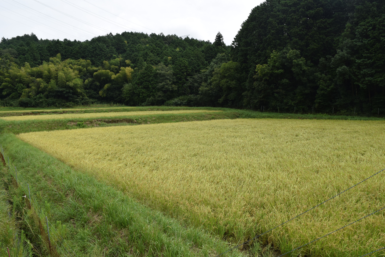 株式会社 丹波西山